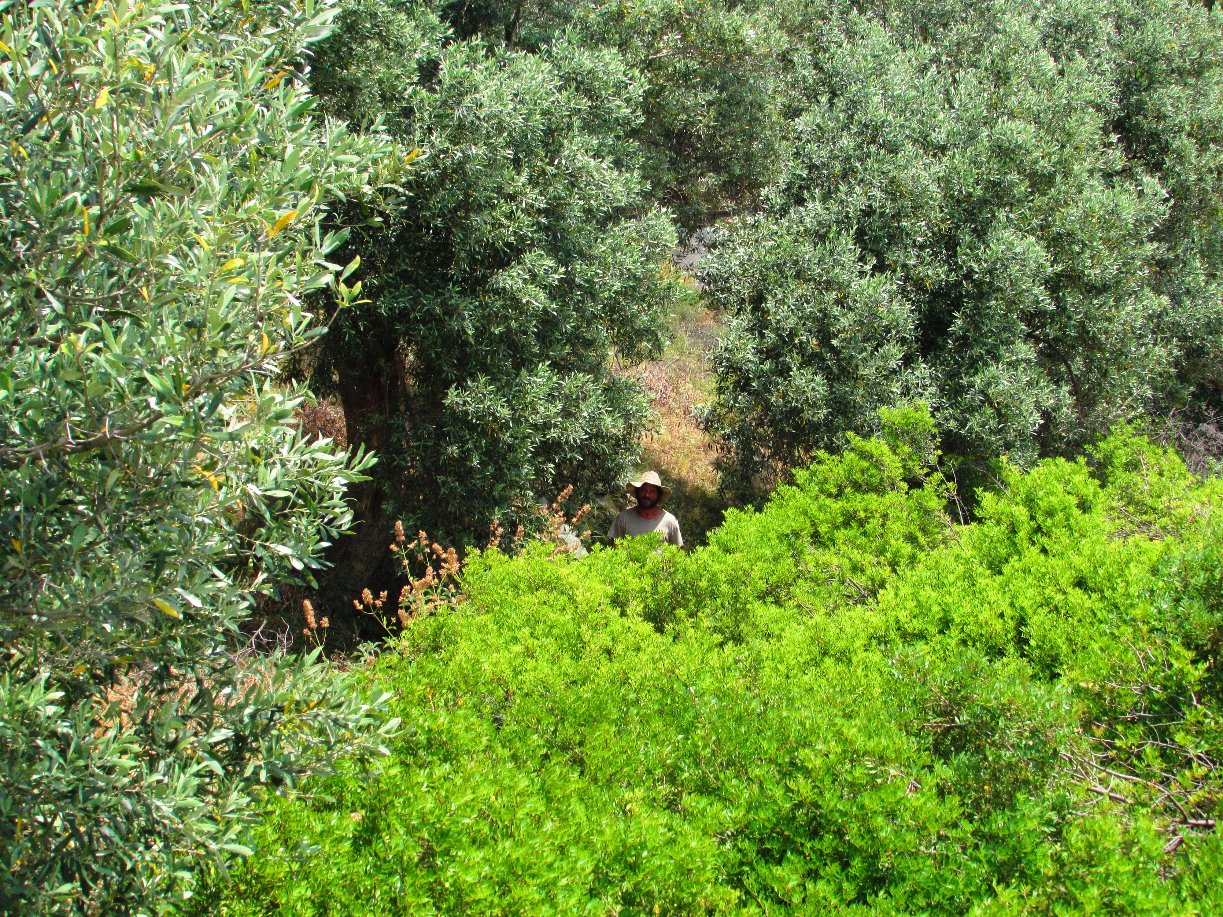 Asaf in an olive grove in Greece where we camped